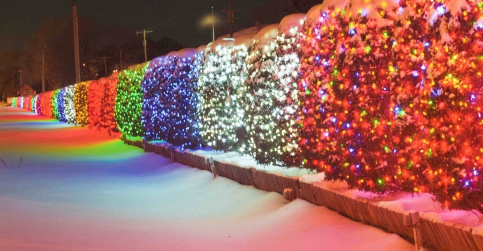 University Avenue Tree Lights Are >> Support The Lights University Avenue Holiday Lights
